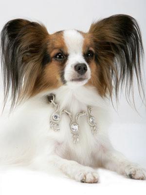 Dimond Dog Food Websire