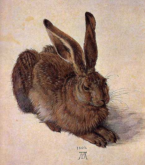 Albrecht Durer, rabbit