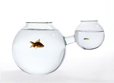 Floating Glass Fish Ornaments