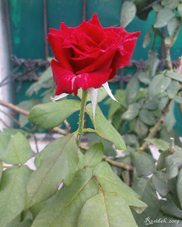Flower Idioms | Come up roses © 2009-now by Rosidah Abidin