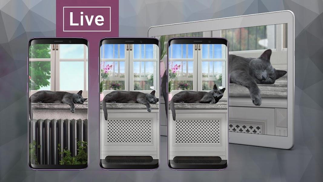 cute-lazy-cat-live-wallpaper-screenshot-1