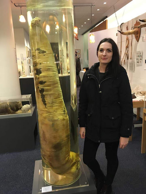the phallogical museum iceland