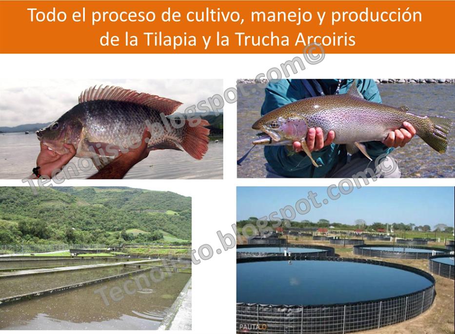 """""""Proyecto Cultivo, Manejo y Producción de Cachamas, Tilapias y Truchas-1"""""""