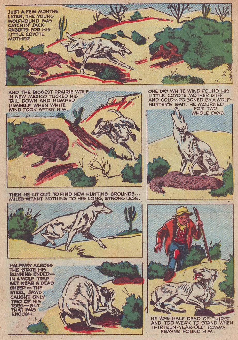 Read online Animal Comics comic -  Issue #30 - 30