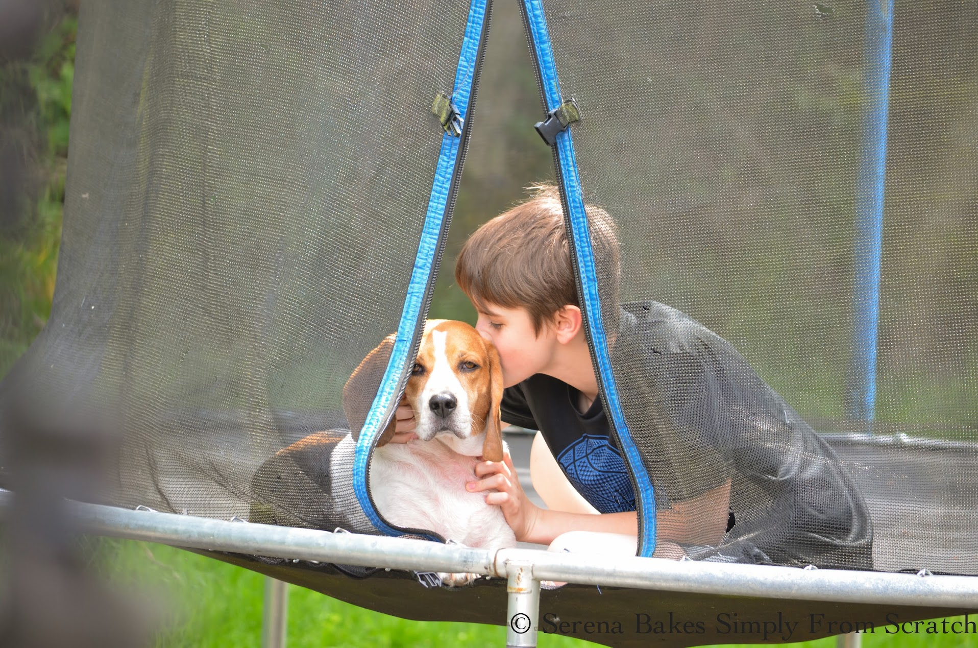 A Boy And His Beagle.